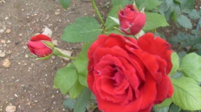 Rocio en flor